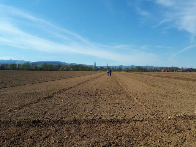 Ferme reymann raedersheim vie à la ferme 4