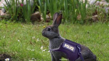 Joyeuses Fêtes de Pâques tout le monde :-)