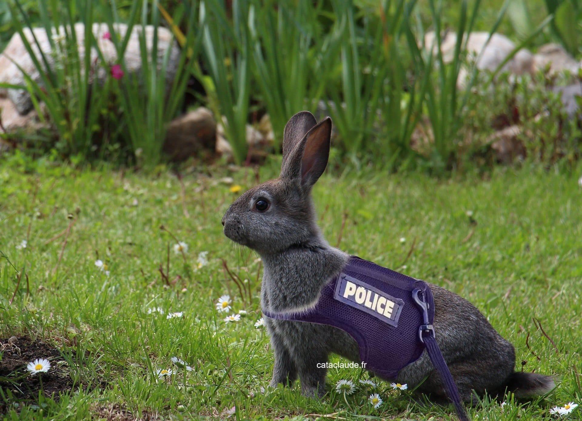 Joyeuses Pâques. Cataclaude fr creation site internet Mulhouse 68 souhaite de joyeuses fêtes de Pâques 2020 malgré le confinement.