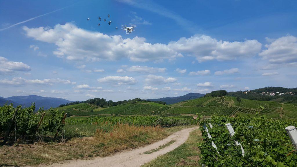 14/07/2020 : Attaques sur le drone en 1er lieu par un Milan puis poursuivi par des buses plutôt vindicatives et en bande pendant le tournage