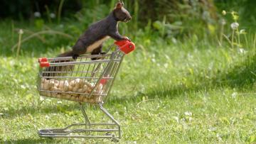 Vous ne pouvez plus faire vos courses en Allemagne ?