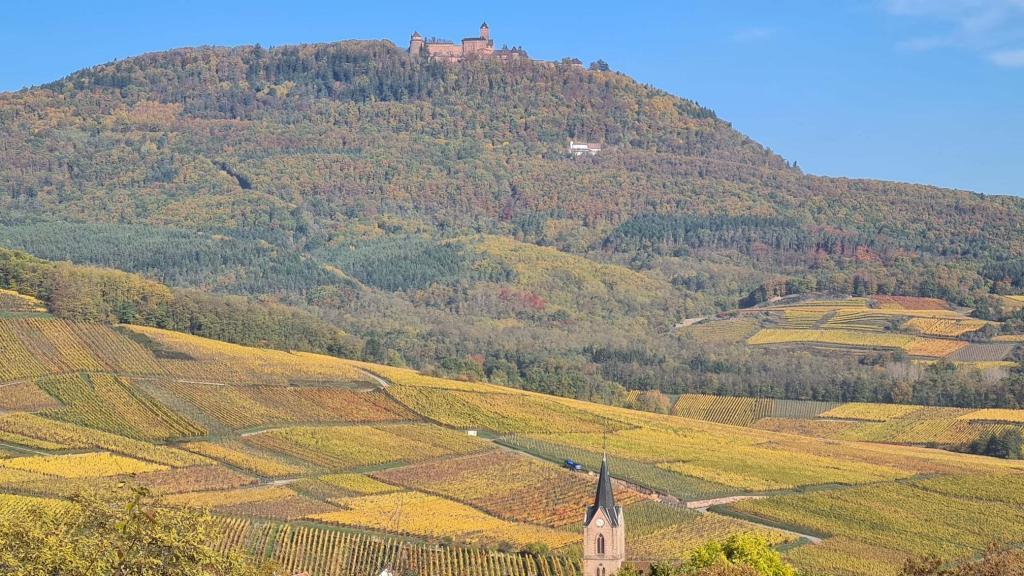 La Famille KRESS-BLEGER est heureuse de vous présenter son exploitation revêtue de sa robe d'automne et située sur la route des vins à 68 Rodern (Alsace) d'une manière différente avec ces prises de vues aériennes effectuées à l'aide d'un drone.